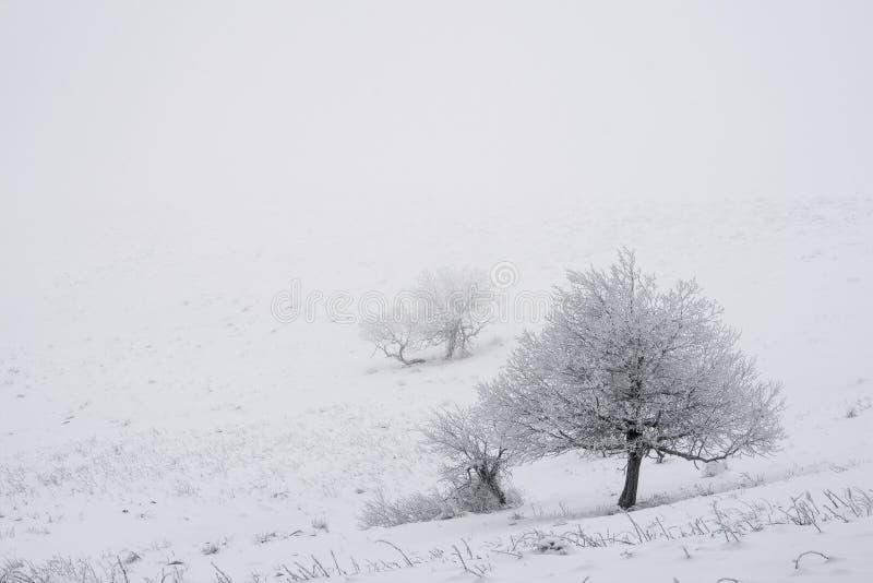 Μόνα δέντρα στο χειμώνα στοκ εικόνες