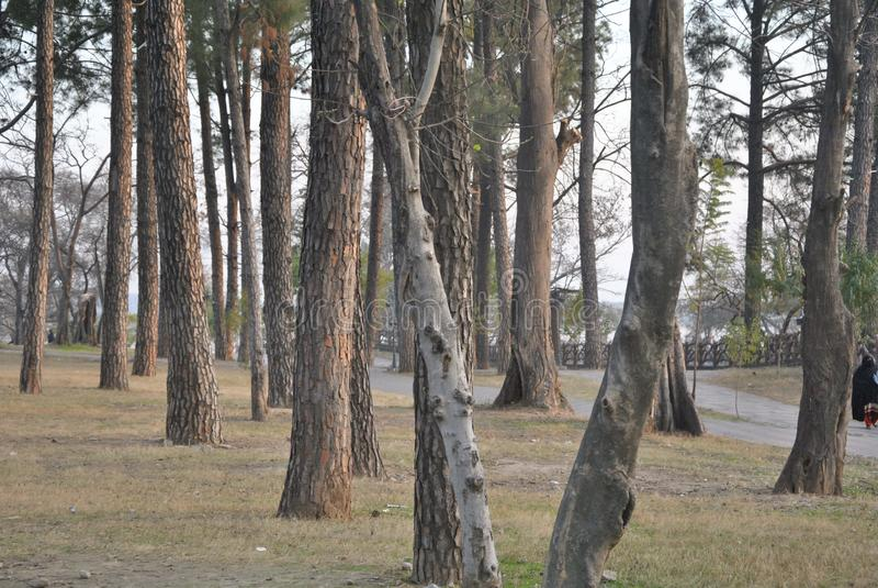 Μόνα μόνιμα δέντρα στοκ φωτογραφία με δικαίωμα ελεύθερης χρήσης