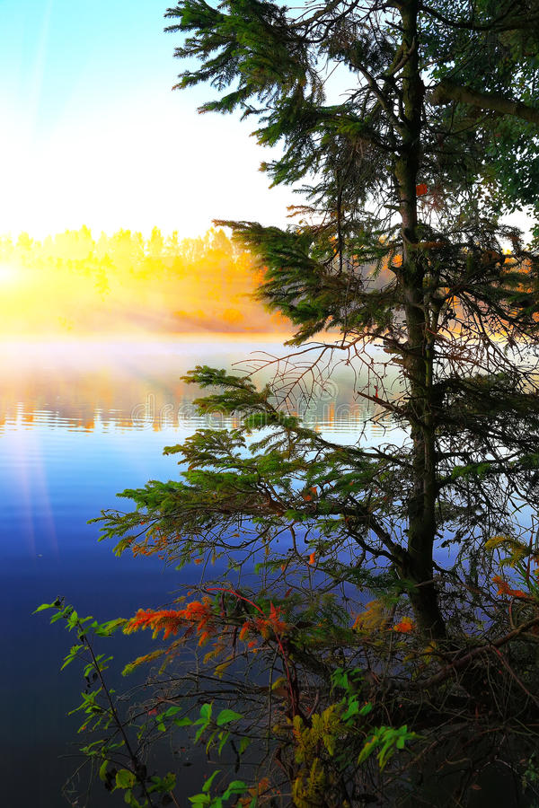 Μόνη ανάπτυξη δέντρων έλατου σε μια λίμνη στην ανατολή στοκ φωτογραφίες