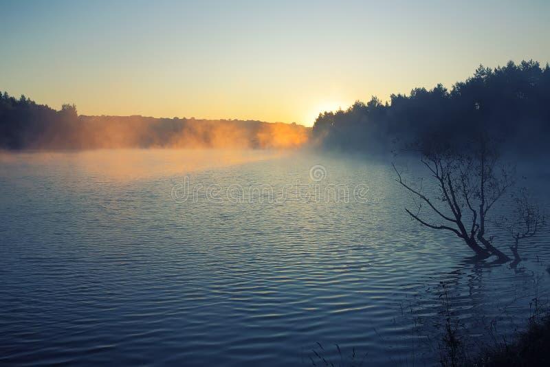 Μόνη ανάπτυξη δέντρων σε μια λίμνη στην ανατολή στοκ φωτογραφία