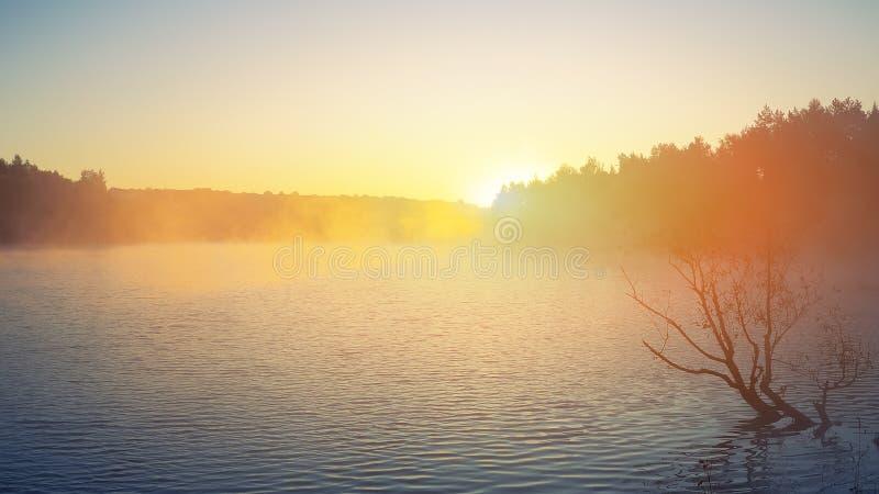 Μόνη ανάπτυξη δέντρων σε μια λίμνη στην ανατολή στοκ εικόνες