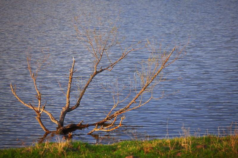 Μόνη ανάπτυξη δέντρων σε μια λίμνη στοκ εικόνες με δικαίωμα ελεύθερης χρήσης