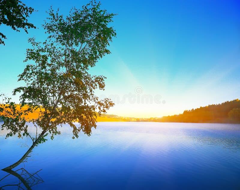 Μόνη ανάπτυξη δέντρων σημύδων σε μια λίμνη στην ανατολή μπλε ουρανός στοκ φωτογραφία με δικαίωμα ελεύθερης χρήσης