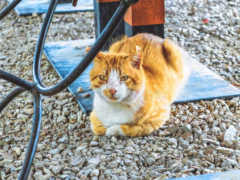 Μόνη και λυπημένη βρώμικη περιπλανώμενη κόκκινη γάτα στοκ εικόνες