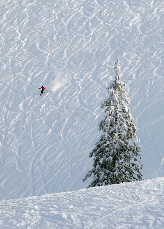 Download μόνη κλίση σκι στοκ εικόνα. εικόνα από σκι, κλίση, δέντρο - 121733