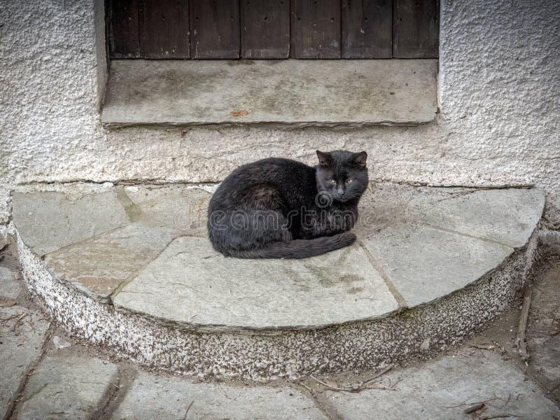 Μόνη μαύρη γάτα έξω από την πόρτα γάτες χαριτωμένες στοκ εικόνα με δικαίωμα ελεύθερης χρήσης
