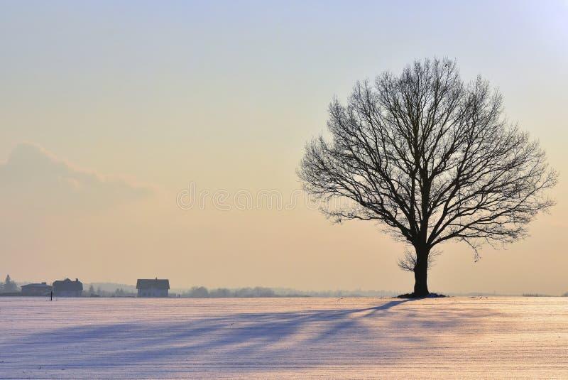Μόνη σκιαγραφία δέντρων, ζωηρόχρωμο χειμερινό ηλιοβασίλεμα Λιθουανία στοκ φωτογραφία με δικαίωμα ελεύθερης χρήσης