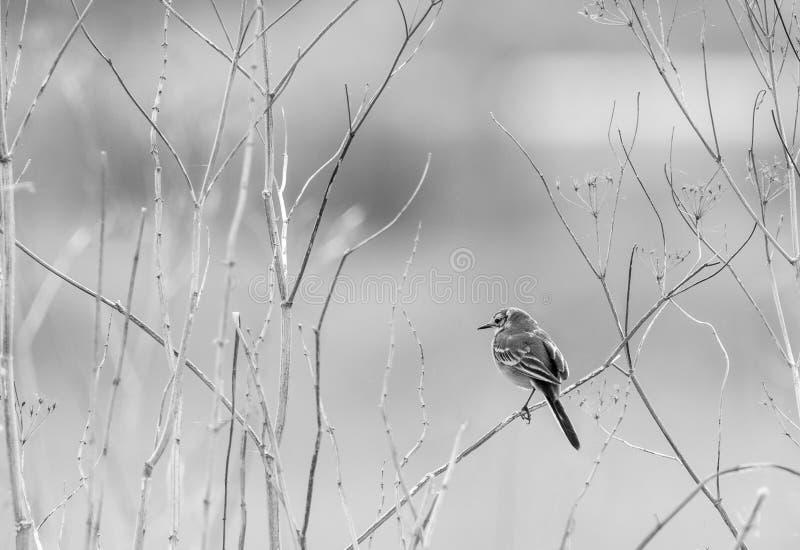 Μόνη συνεδρίαση πουλιών σε έναν κλάδο στοκ φωτογραφία με δικαίωμα ελεύθερης χρήσης