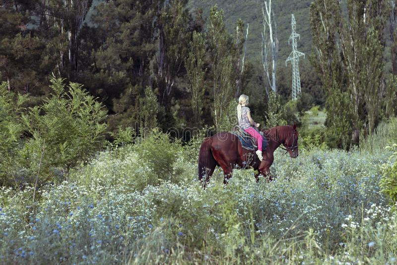 Μόνοι χαριτωμένοι γύροι νέων κοριτσιών στη σέλα που οδηγά ένα καφετί άλογο στο δάσος ή το πάρκο στο ηλιοβασίλεμα Το κορίτσι ελέγχ στοκ φωτογραφία