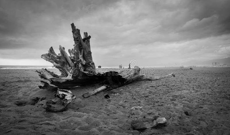 Μόνος κορμός στην παραλία σε μια νεφελώδη ημέρα στοκ εικόνες