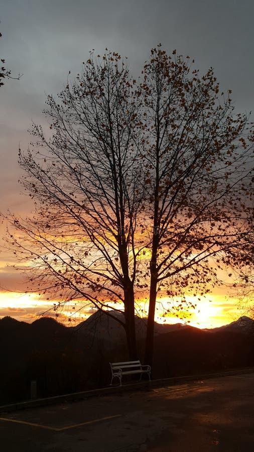 Μόνος πάγκος με το δέντρο στο ηλιοβασίλεμα στοκ φωτογραφίες