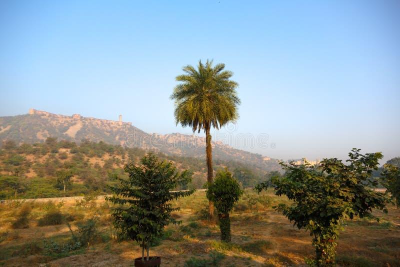 Μόνος φοίνικας σε ένα υπόβαθρο των βουνών στοκ φωτογραφία με δικαίωμα ελεύθερης χρήσης