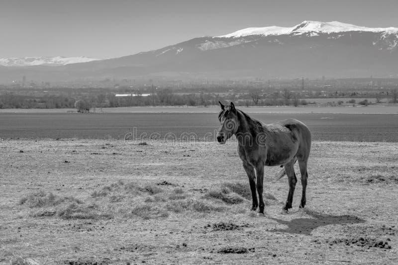 Μόνο άλογο στον τομέα στο υπόβαθρο της όμορφης φύσης στοκ εικόνα