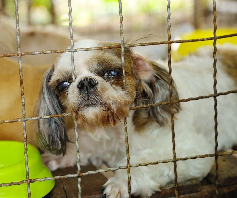 Κινηματογράφηση σε πρώτο πλάνο ενός κλουβιού σκυλιών στοκ εικόνα
