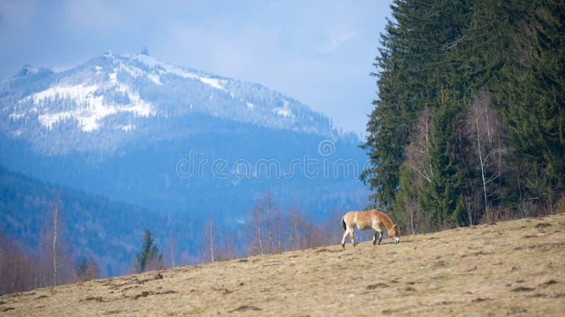 Μόνο άλογο στοκ φωτογραφία με δικαίωμα ελεύθερης χρήσης