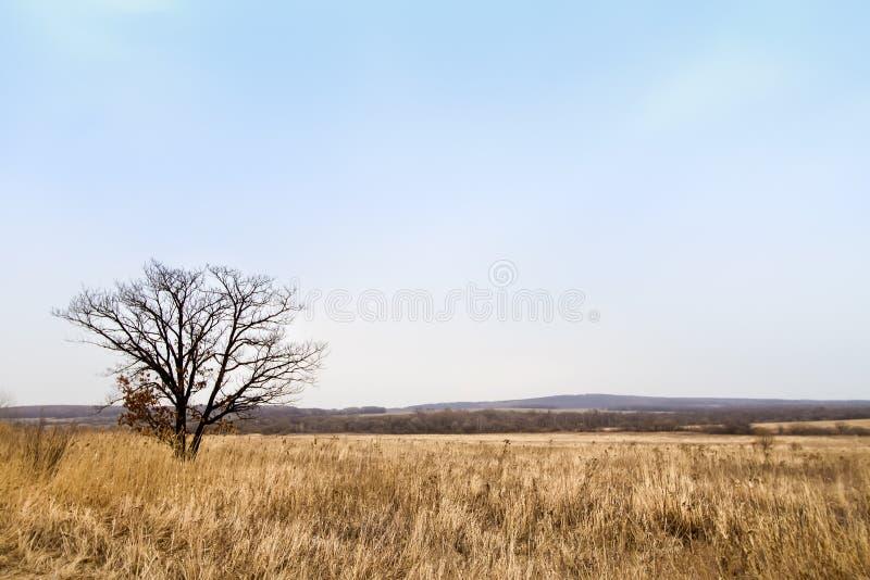 μόνο δέντρο πεδίων στοκ φωτογραφία