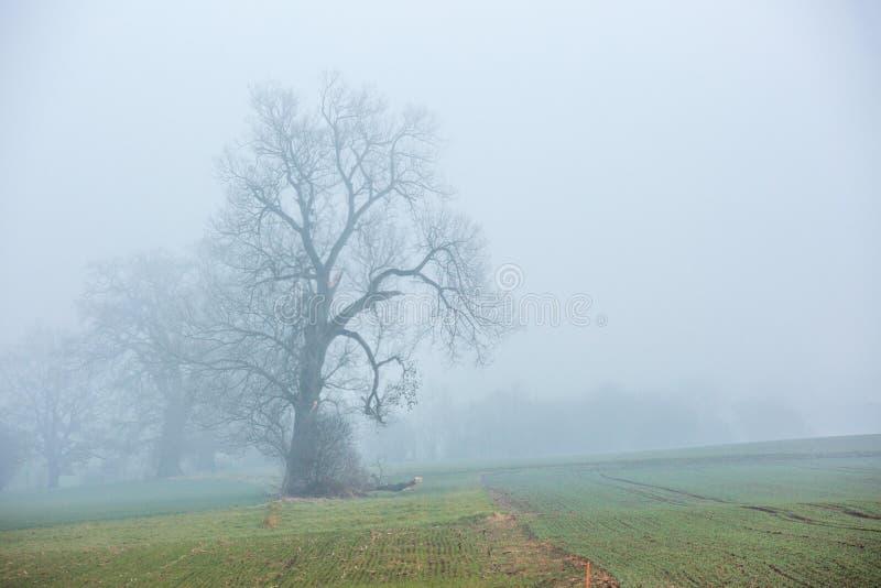 Μόνο δέντρο στάσεων σε έναν κρύο καιρό στοκ εικόνες