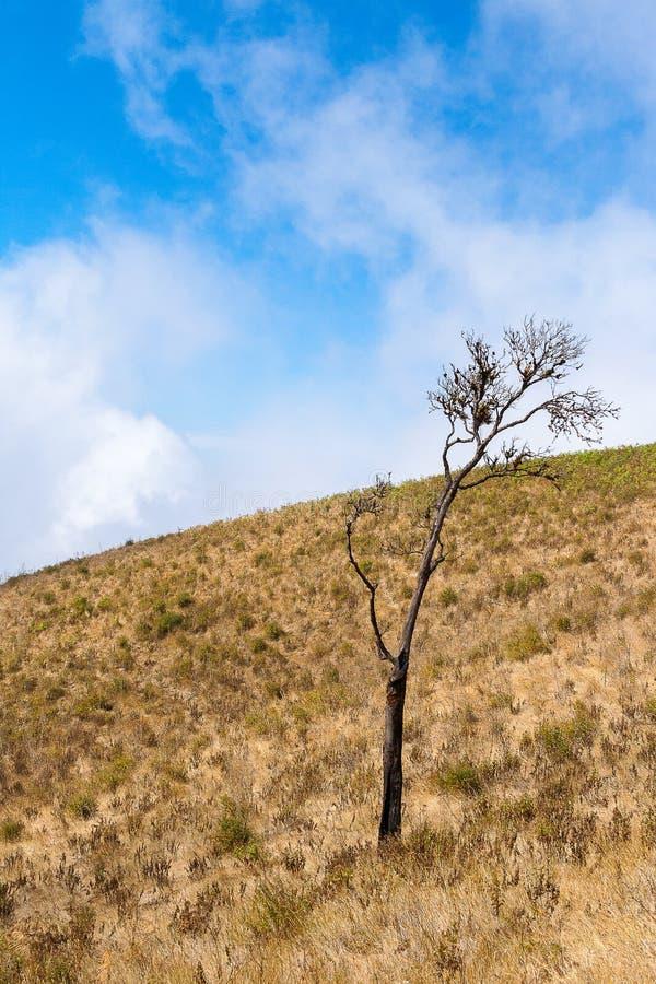 Μόνο δέντρο στο βουνό ίχνος φύσης Kew mae στο παν στοκ εικόνα με δικαίωμα ελεύθερης χρήσης