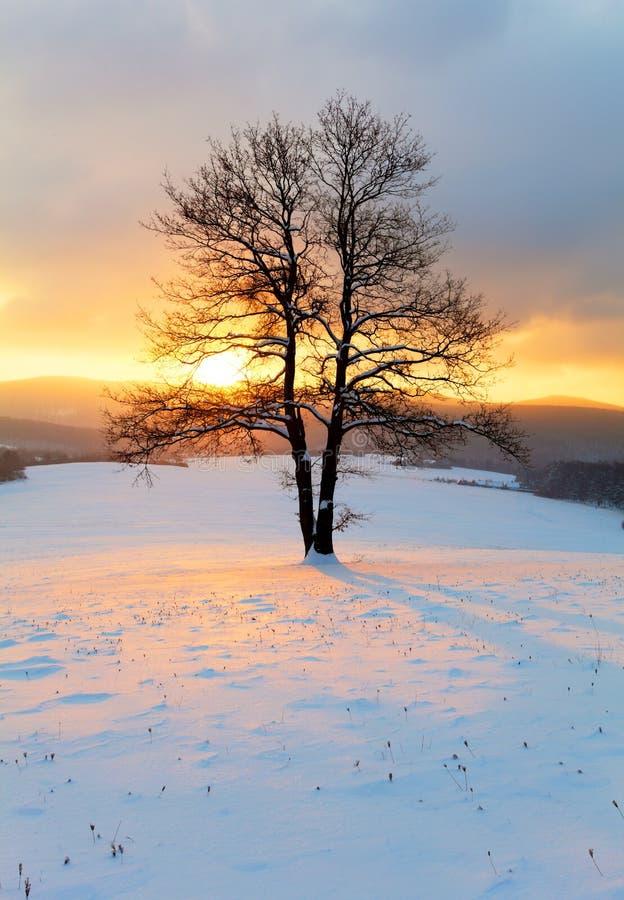 Μόνο δέντρο στο τοπίο χειμερινής ανατολής - φύση στοκ εικόνες