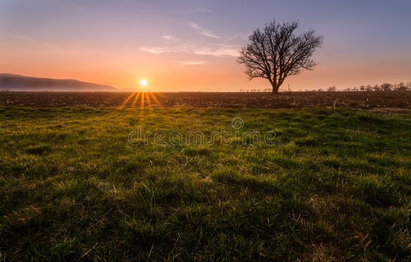 μόνο δέντρο στοκ εικόνες με δικαίωμα ελεύθερης χρήσης