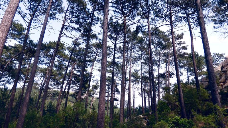 Μόνο δέντρα στο δάσος στοκ εικόνα