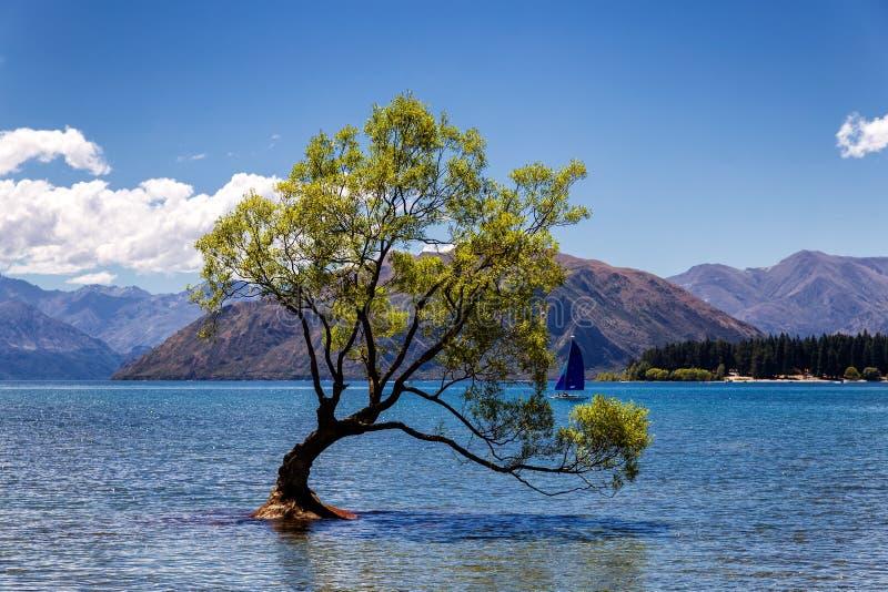 Μόνο δέντρο σε μια λίμνη και ένα γιοτ σε Wanaka, Νέα Ζηλανδία στοκ φωτογραφία με δικαίωμα ελεύθερης χρήσης