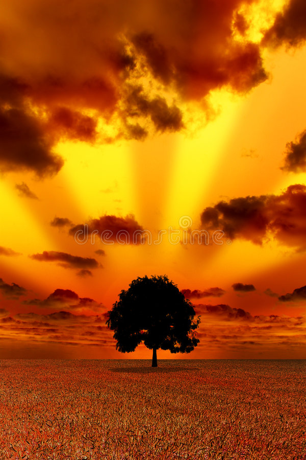 Μόνο δέντρο στην κόκκινη ανασκόπηση στοκ εικόνα με δικαίωμα ελεύθερης χρήσης