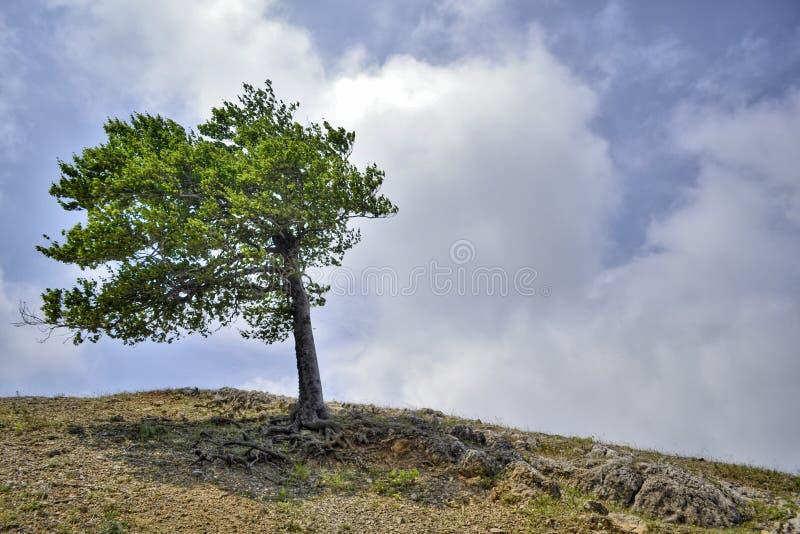 Μόνο δέντρο στη βουνοπλαγιά ανάμεσα στα σύννεφα και τον ουρανό στοκ εικόνα