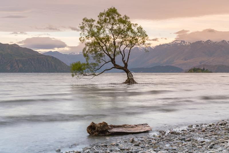 Μόνο δέντρο στη λίμνη Νέα Ζηλανδία νερού Wanaka στοκ φωτογραφία