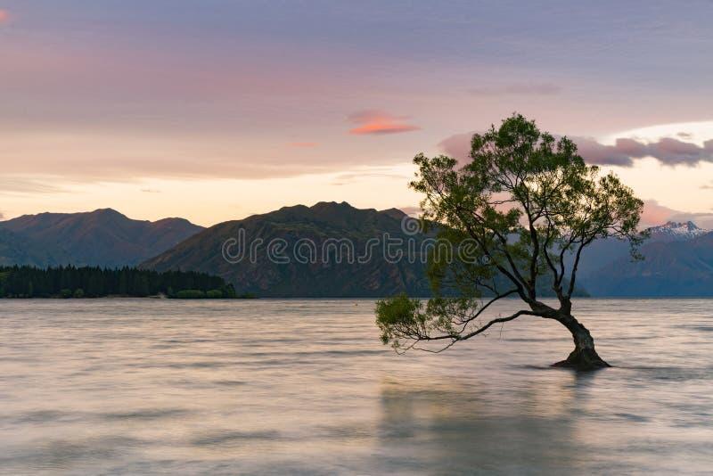 Μόνο δέντρο στη λίμνη νερού, νότιο νησί Wanaka στοκ φωτογραφίες
