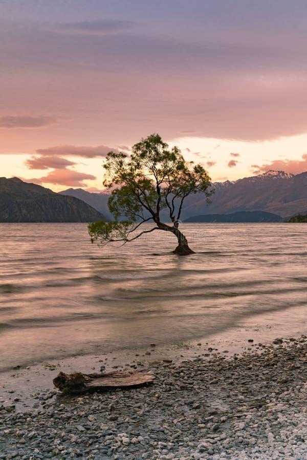 Μόνο δέντρο στη λίμνη νερού Wanaka, Νέα Ζηλανδία στοκ φωτογραφίες με δικαίωμα ελεύθερης χρήσης