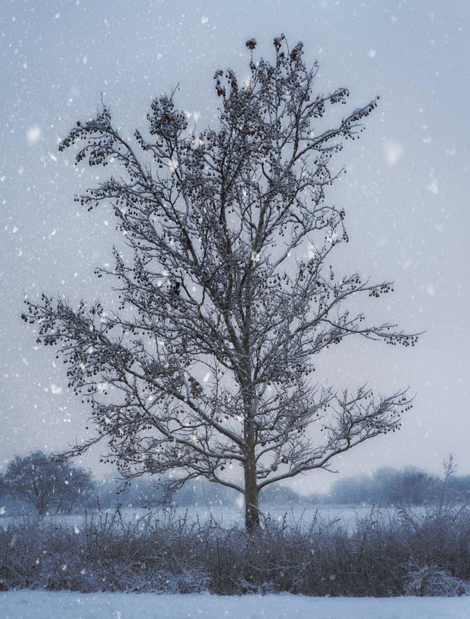 Μόνο δέντρο στις χιονοπτώσεις στοκ εικόνες