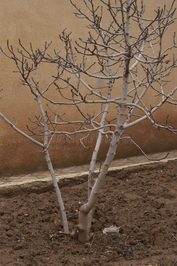 Μόνο δέντρο στο ναυπηγείο στοκ εικόνες με δικαίωμα ελεύθερης χρήσης