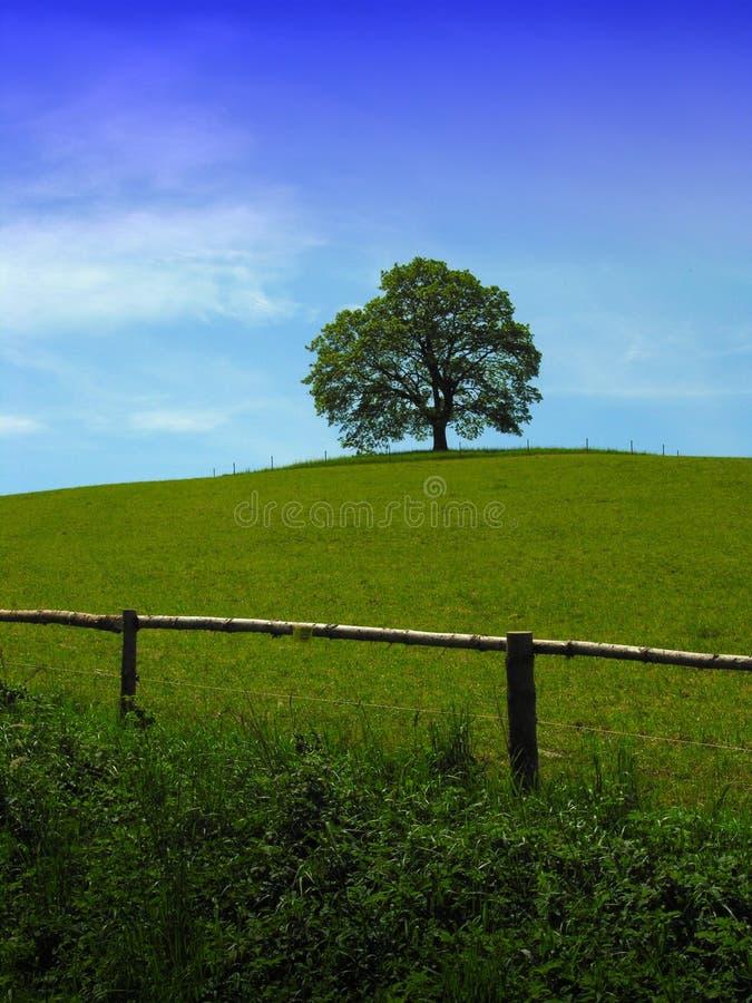 μόνο δέντρο φραγών στοκ εικόνα με δικαίωμα ελεύθερης χρήσης