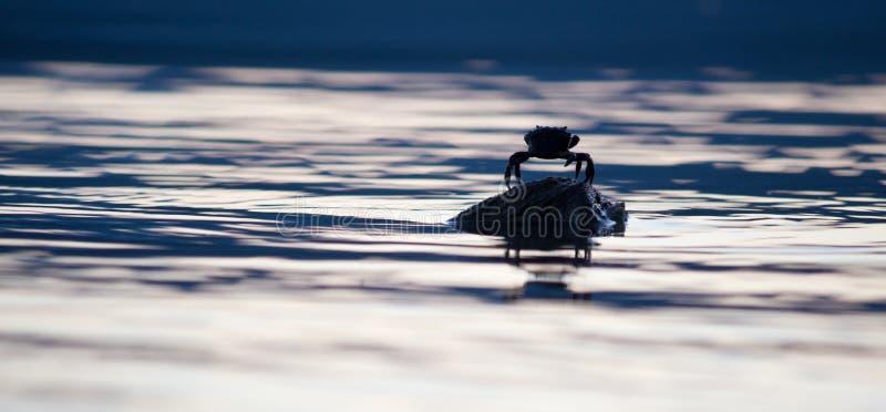 Μόνο καβούρι στο βράχο στη μέση του ωκεανού στοκ φωτογραφίες