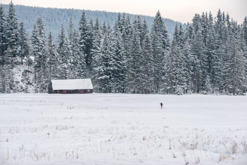 μόνο να κάνει σκι δρομέων Μια μεγάλη μορφή δραστηριότητας κατά τη διάρκεια του χειμώνα στοκ φωτογραφίες με δικαίωμα ελεύθερης χρήσης