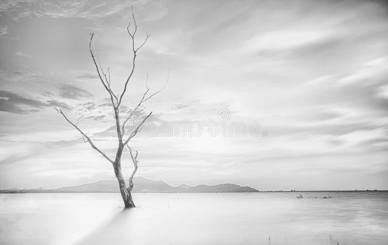 Μόνο νεκρό δέντρο στοκ εικόνα με δικαίωμα ελεύθερης χρήσης