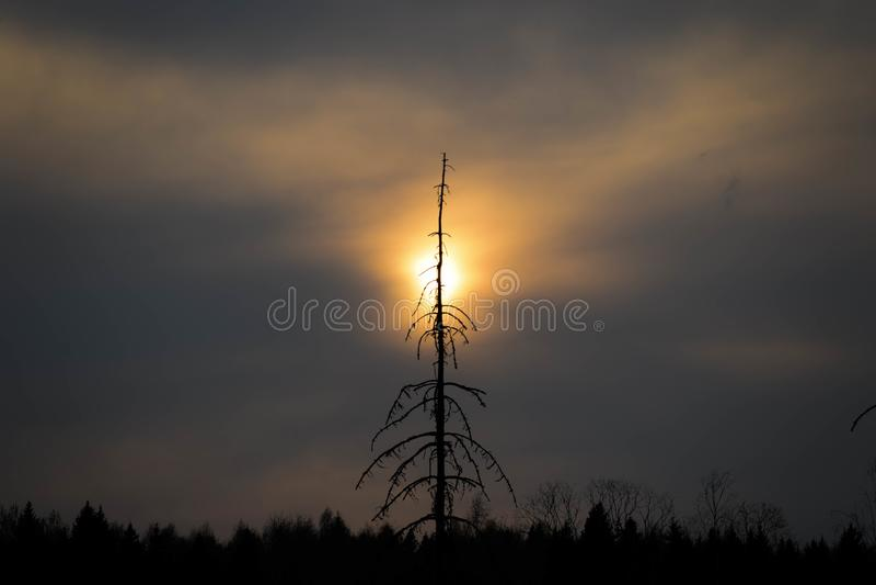 Μόνο ξηρό δέντρο στο υπόβαθρο ηλιοβασιλέματος στοκ φωτογραφίες