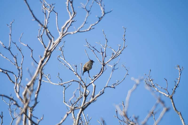 Μόνο πουλί στο παλαιό δέντρο στοκ εικόνα με δικαίωμα ελεύθερης χρήσης