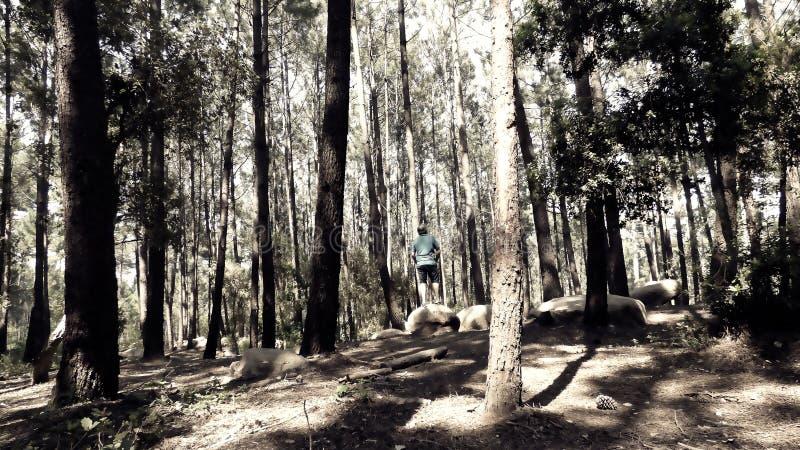 Μόνο στο δάσος που απολαμβάνει τη φύση στοκ φωτογραφία