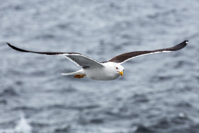Μόνο seagull ενάντια στη θάλασσα στο δυσάρεστο καιρό στοκ φωτογραφίες