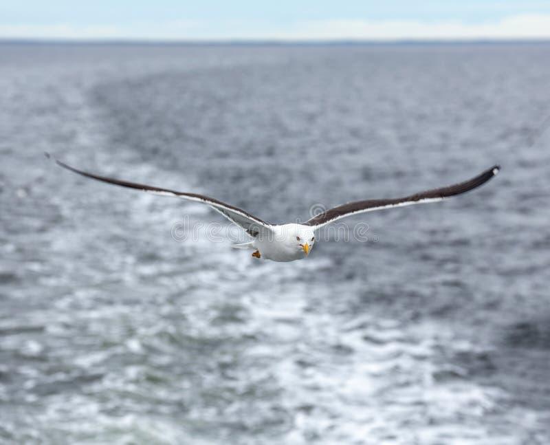Μόνο seagull ενάντια στη θάλασσα στο δυσάρεστο καιρό στοκ εικόνα