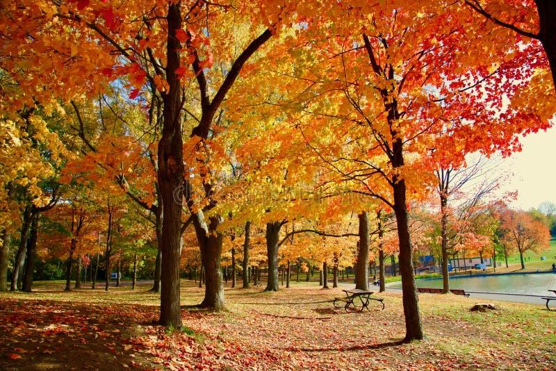 Μόντρεαλ, φθινόπωρο, Κεμπέκ Καναδάς στοκ φωτογραφία με δικαίωμα ελεύθερης χρήσης