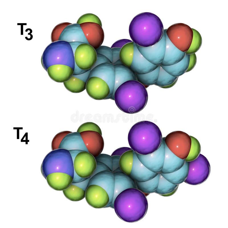 Μόρια των ορμονών θυροειδή T3 και T4 απεικόνιση αποθεμάτων