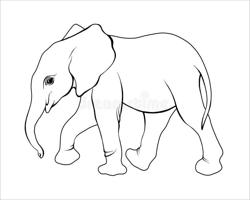 Μόσχος ελεφάντων στοκ φωτογραφία με δικαίωμα ελεύθερης χρήσης