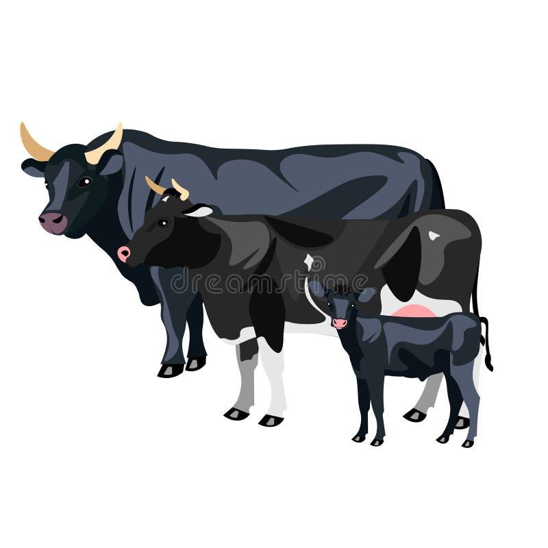 Μόσχος και Δελτίο αγελάδων ελεύθερη απεικόνιση δικαιώματος