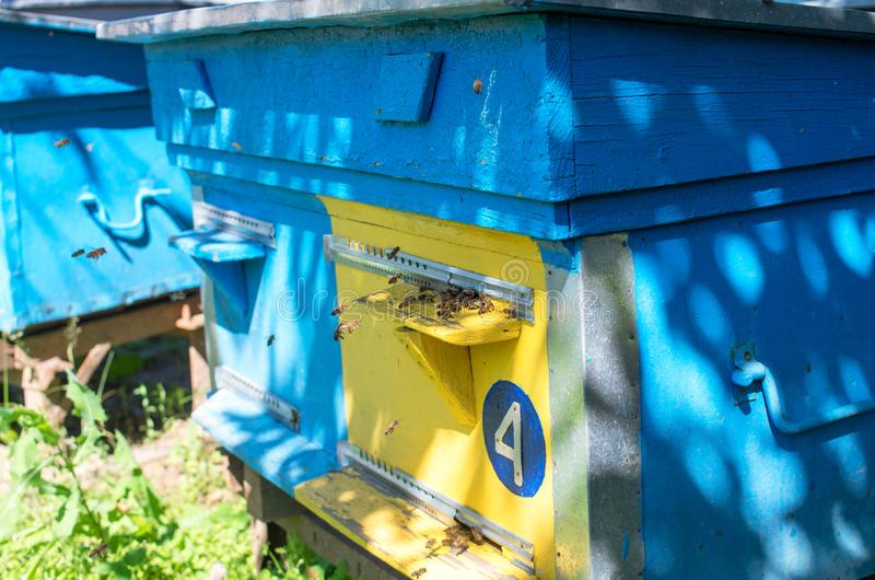 Μύγα μελισσών μελιού κοντά στην κυψέλη στοκ εικόνα
