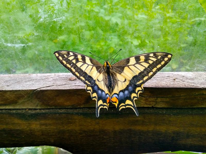 Μύγα πεταλούδων μακριά στοκ φωτογραφίες