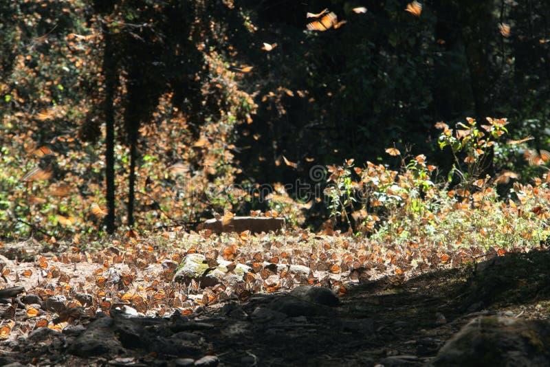 Μύγα πεταλούδων μοναρχών στοκ εικόνα με δικαίωμα ελεύθερης χρήσης