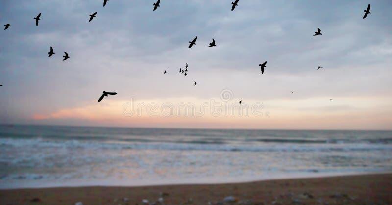 Μύγα πουλιών επάνω από τη θάλασσα στο χρόνο ηλιοβασιλέματος με τη σκηνή λυκόφατος στοκ φωτογραφία με δικαίωμα ελεύθερης χρήσης